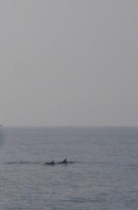 Delfine kleiner
